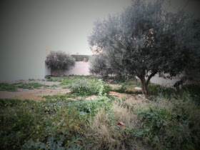 Tunisia property for sale in Hammam-Sousse, Hammam Sousse